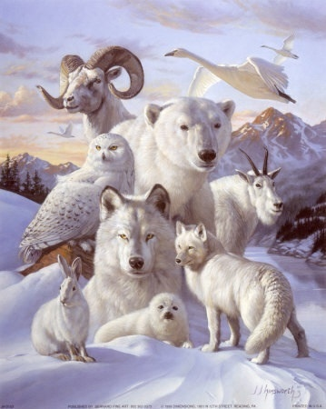Wild Animals wallpaper entitled Beautiful Albinos