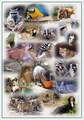 Collage - wild-animals photo