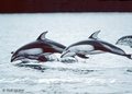 Whales - wild-animals photo