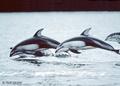Whales - wild-animals photo