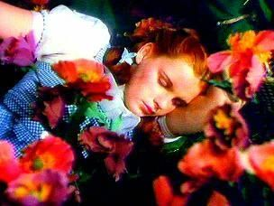 Dorothy sleeping amongst the poppies