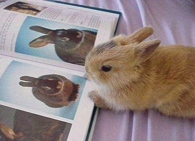 Domestic animais wallpaper titled Funny Bunny