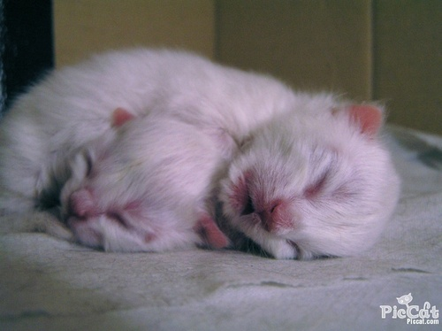 Domestic Animals wallpaper called Kittens