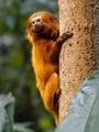 Monkey - wild-animals photo