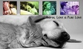 Pet Collage - domestic-animals screencap