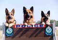 Police Dogs - domestic-animals screencap
