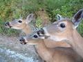 Trio - wild-animals photo
