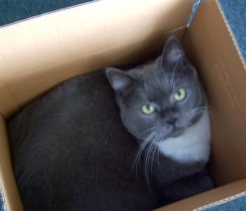 cat in a cardboard