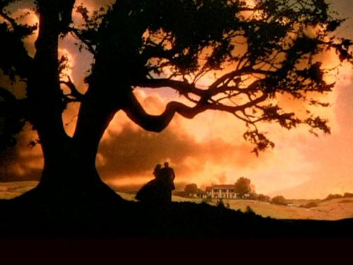 Gone with the Wind wallpaper containing a live oak, a beech, and a tree called Gone With the Wind
