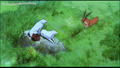 Princess Mononoke - princess-mononoke photo