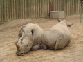 Seneca Park Zoo White Rhinos - zoos photo