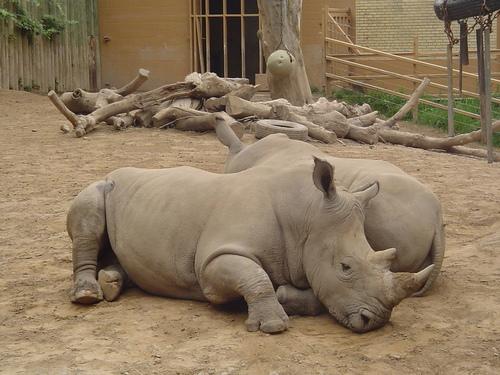 Seneca Park Zoo White Rhinos