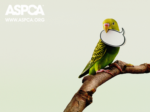 ASPCA  Bird Wallpaper