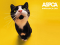 against-animal-cruelty - ASPCA Cat Wallpaper wallpaper
