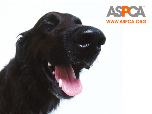 ASPCA Dog 壁纸