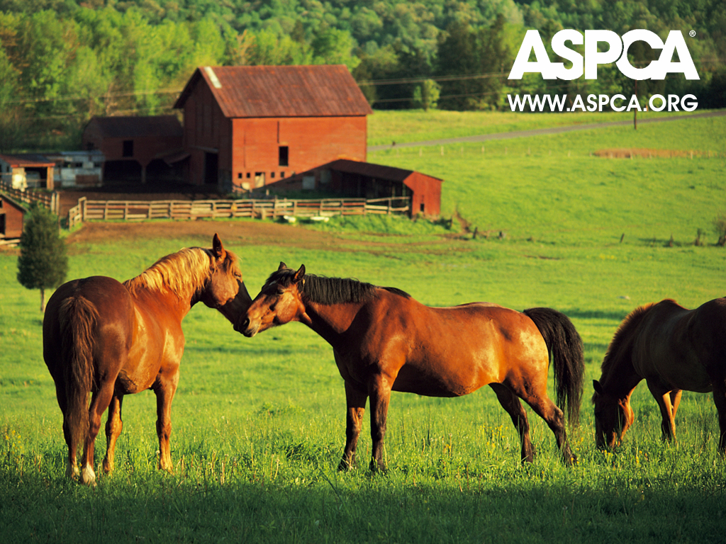against horse slaughter American horse are transported to canada & mexico to face a horrific death at the hands of butchers an overwhelming majority of americans want this practice to end.