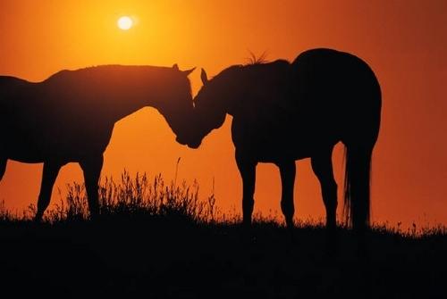 farasi karatasi la kupamba ukuta titled Horse upendo