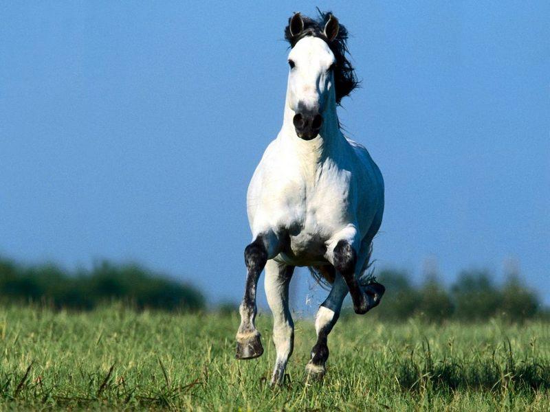 horse wallpaper wild. Horse Wallpaper - Horses Wallpaper (4486243) - Fanpop