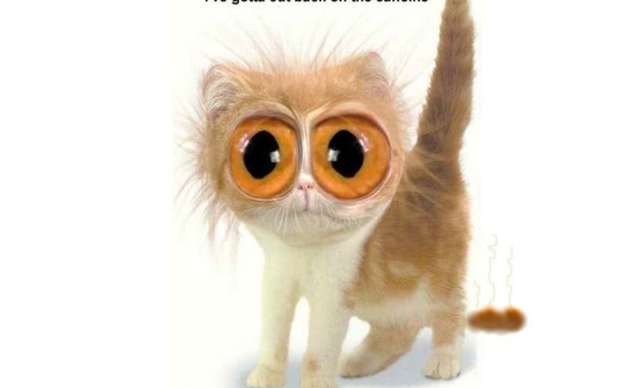Big Eyes - Animal Humor Wallpaper (4515746) - Fanpop