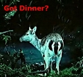 Got Dinner? Deer - twilight-series photo