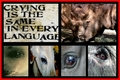 Help Stop the Crying - against-animal-cruelty photo
