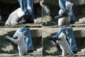 Polar Bear Attack. - wild-animals photo