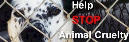 Against Animal Cruelty! wallpaper containing a chainlink fence called Stop Animal Cruelty