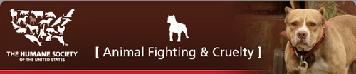 Stop The Dog Fights Campaign