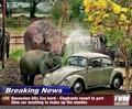 Zoo Recession