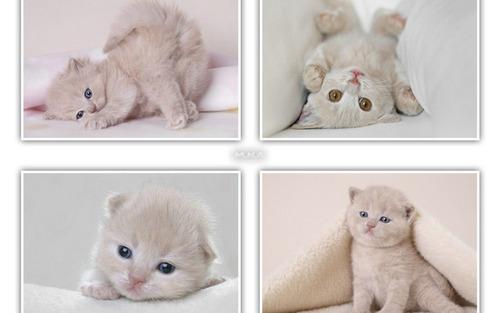 Cute kitten