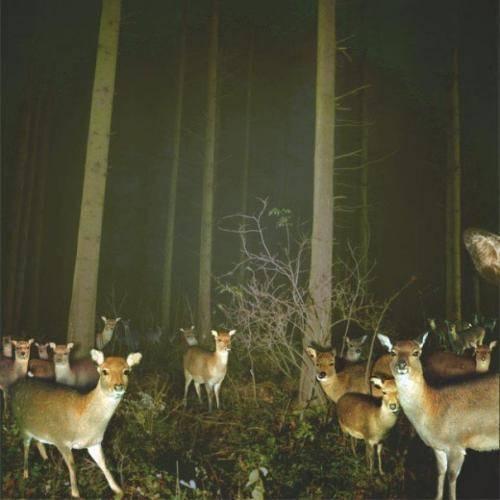 Wild Animals wallpaper called Deer