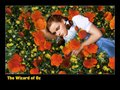 Dorothy In the Poppy Field - the-wizard-of-oz wallpaper