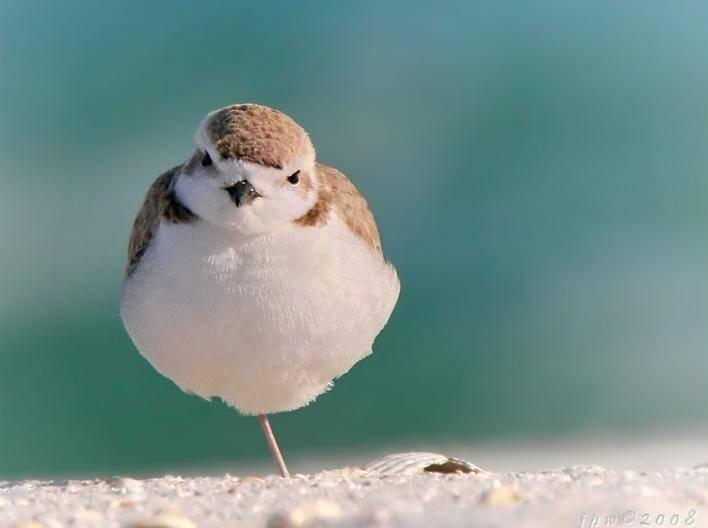 Wild Birds Images Wild Animals Wild Bird