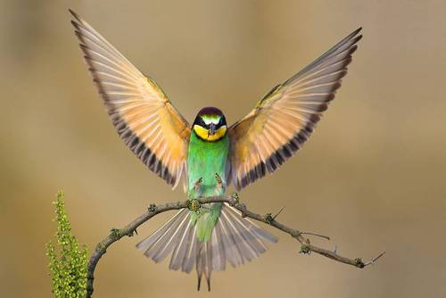 Wild Animals wallpaper entitled Wings