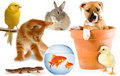 Assorted Pets - domestic-animals photo
