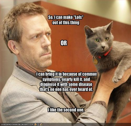 Here Kitty LOLs
