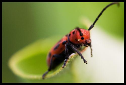 Insect foto por Maciej Karcz
