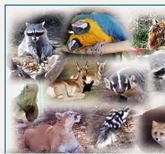 更多 Wild 动物