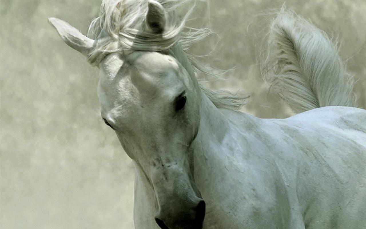 Beautiful horse random wallpaper 4804442 fanpop for Beautiful horses