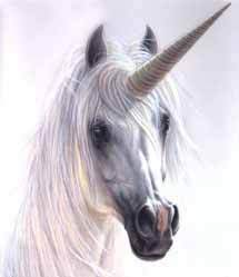 Unicorn Close Up