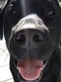 service dog-