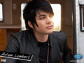 Adam Lambert Wallpaper - american-idol wallpaper