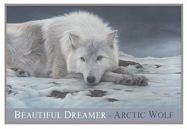 Beautiful Dreamer-Artic wolf