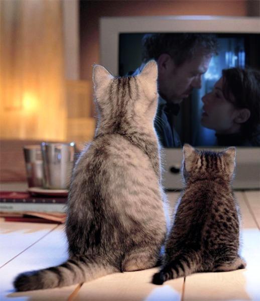 Huddy in TV