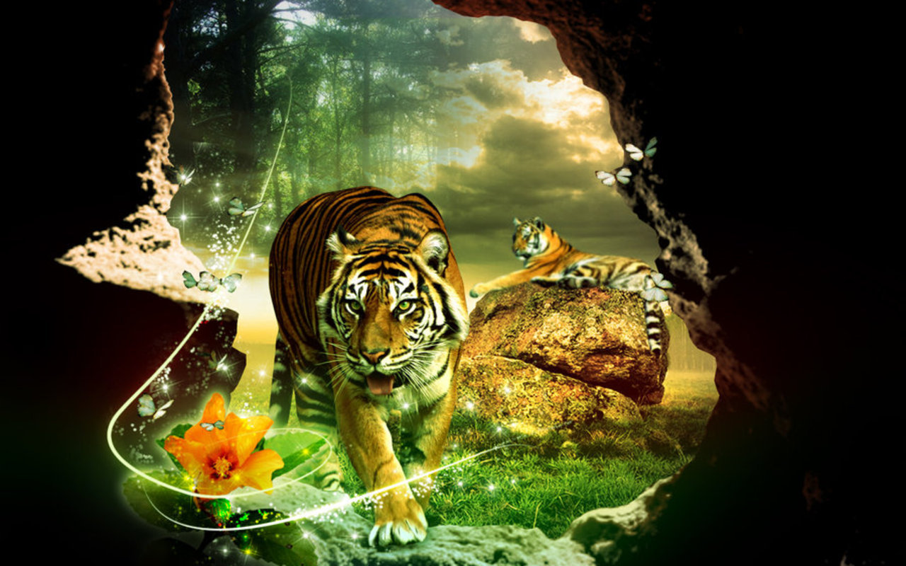 tigers images tiger hd wallpaper and background photos (5091178)