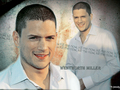 wenworth miller - wentworth-miller wallpaper