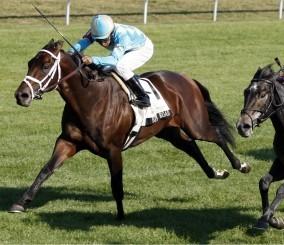 Trances Racers Bittel-Road-race-horses-5155619-284-245