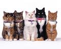 cats - Cats wallpaper wallpaper