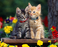 cats - Cats wallpaper wallpaper
