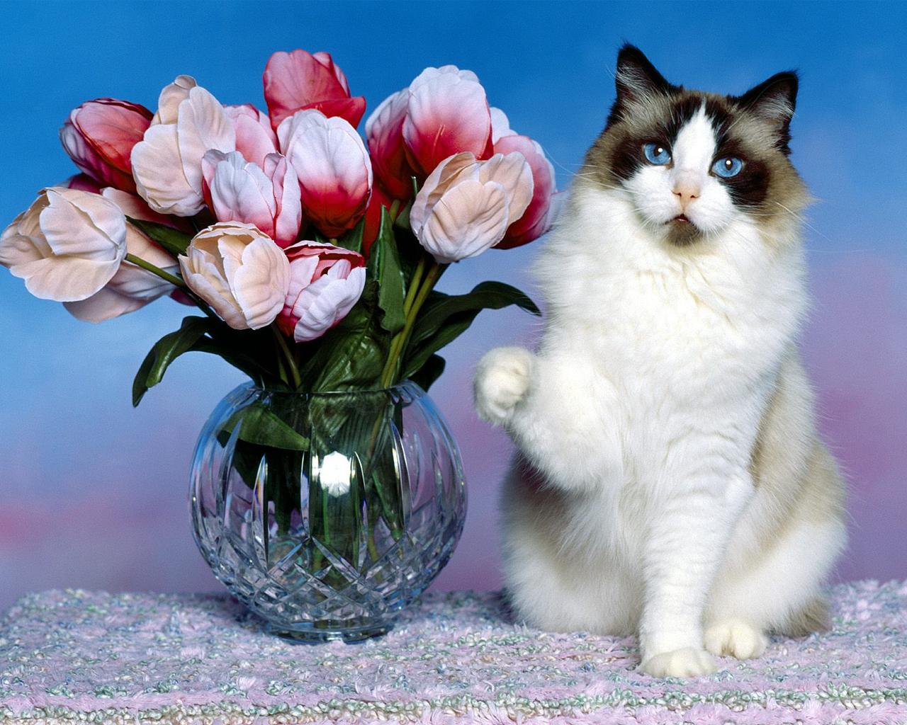 Кошки, куплю, продам, коты